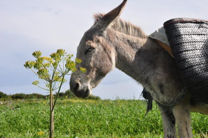 donkey-1714138_1920